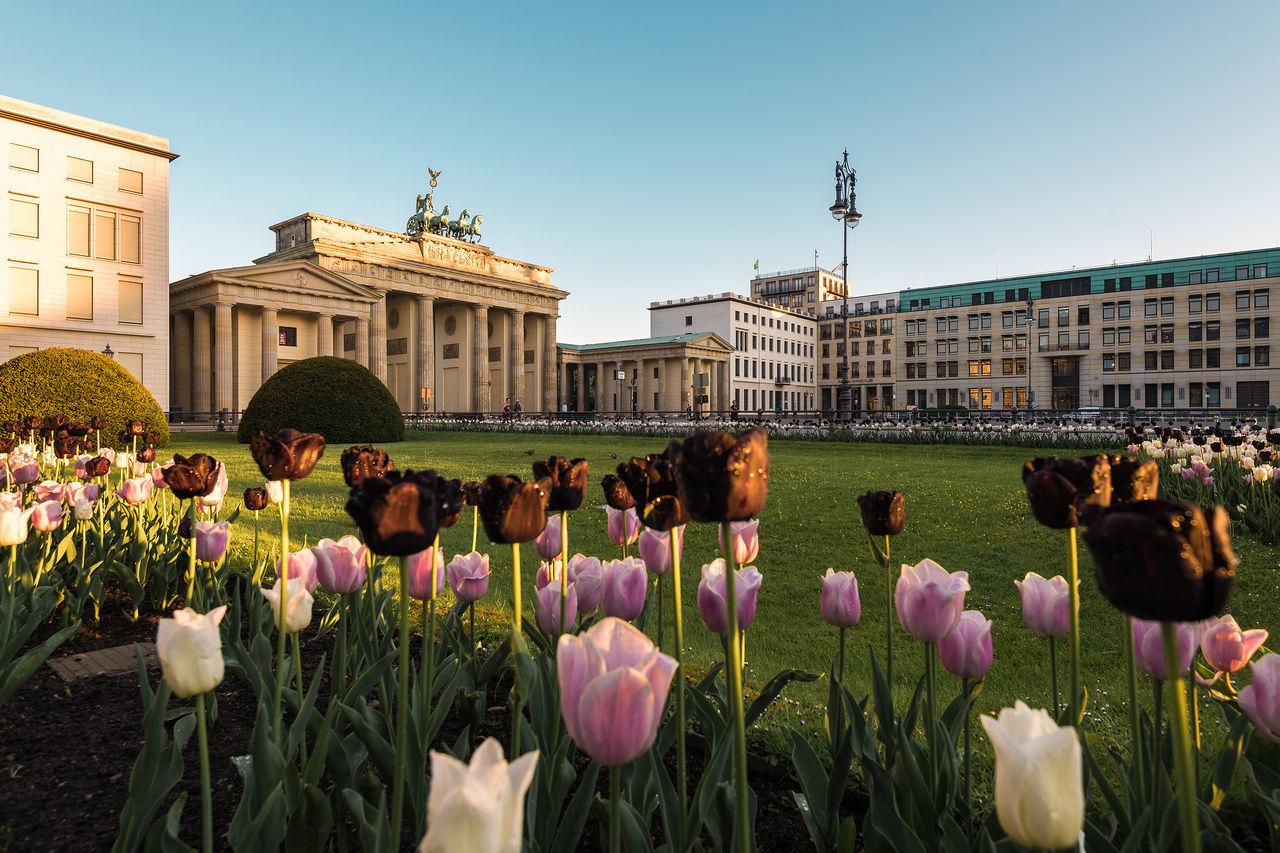 Beautiful stock photos of tulip, Architecture, Beauty In Nature, Berlin, Brandenburg Gate