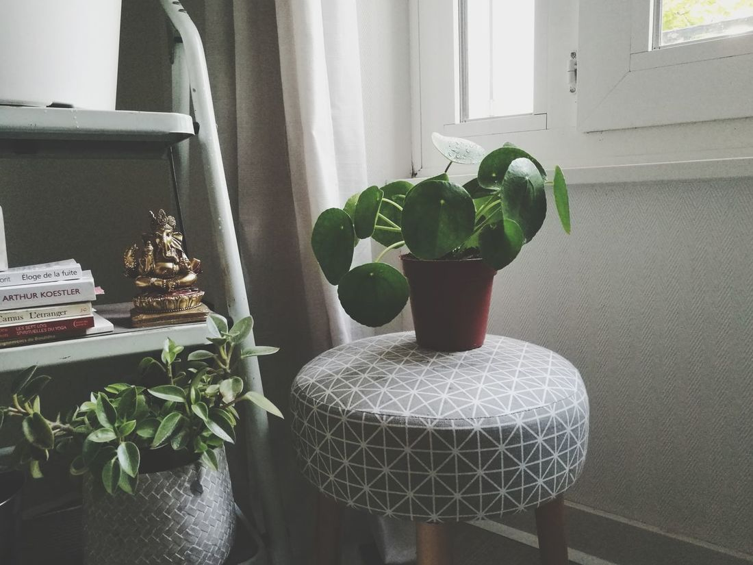 Indoors  Plants Pilea Hoarder Planthoarder Greenery Home Decor Potted Plant Inspirational