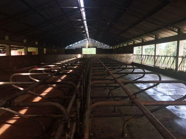 Cow Shed Barn No People Empty Metalwork Farm Dairy Farm Dary Uganda  Light Light And Shadow