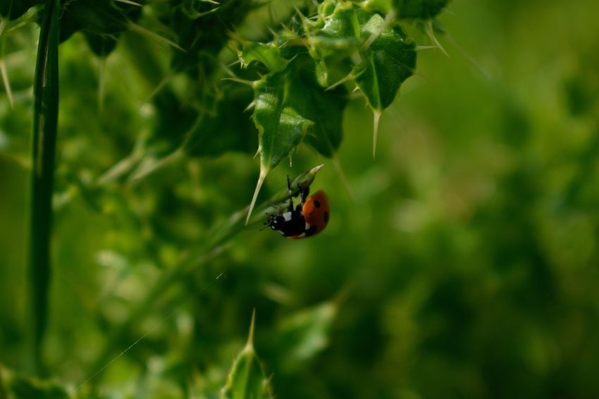 Animal Themes Animals In The Wild Beauty In Nature Close-up Day Fragility Growth Insect Ladybug Nature No People One Animal Outdoors Plant Red Tiny
