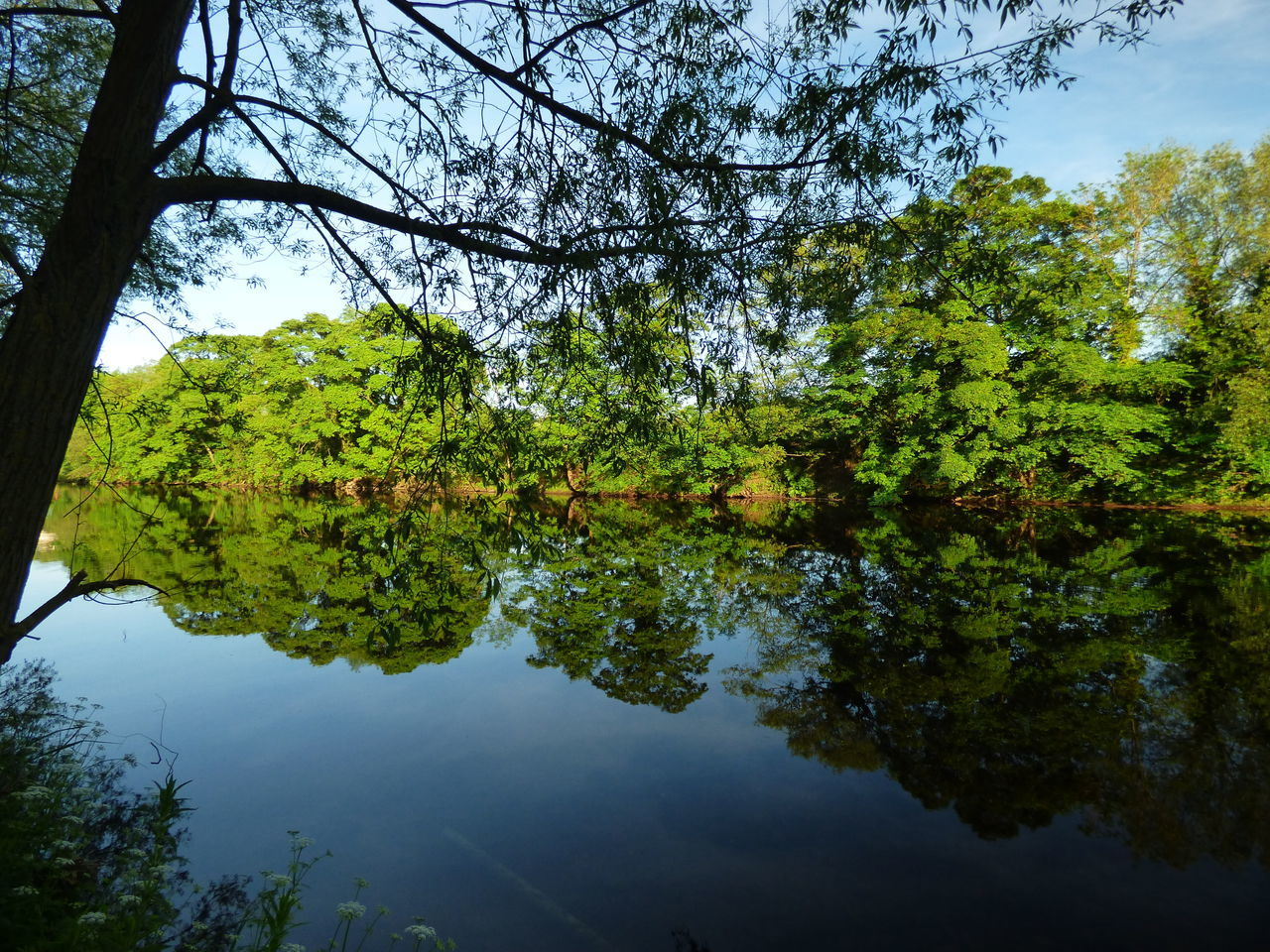 Reflections Reflection Tree Nature Lake Water Day Beauty In Nature Outdoors No People Sky Art Photography Tranquility Popular Photography Low Angle View Scenics Popular Photos Nature Tree Reflection Beauty In Nature
