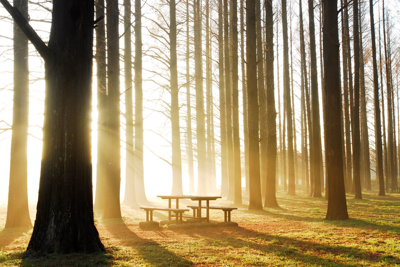 Beautiful stock photos of peaceful,  Abundance,  Beauty In Nature,  Bench,  Day