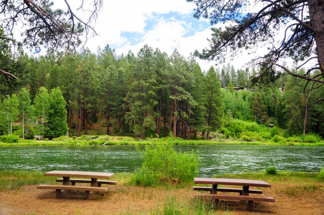 Deschutes River in Central Oregon slowing meandering past a pair of picnic tables Bench Bend Calm Central Oregon Colorful Deschutes Forest Grass Landscape Nature Oregon Outdoors Park Picnic Picnic Table River Stream Tables Tourism Travel Tree United States View Water Wood