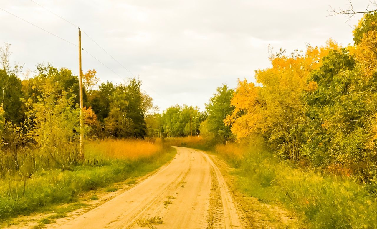 Leaves turning color along an old country road Tree The Way Forward Nature Road Scenics Tranquil Scene Tranquility Beauty In Nature Growth Landscape Grass Day Outdoors No People Sky Transportation Passing Fall Beauty Fall Colors RuralTreasures  Rural Exploration CountryLivinG Country Road Dirtroad Leaves Falling in Manitoba.