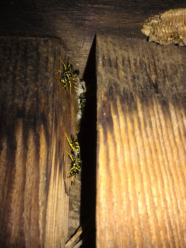 Patterns In Nature Attention To Detail Wood Grain Wood - Material Wood Wasps Nest Nests Wasps Wasp Bee Nest Bees Insects  Outdoors Night Photography Night Hive Invaded Stripes Pattern The Week On Eyem