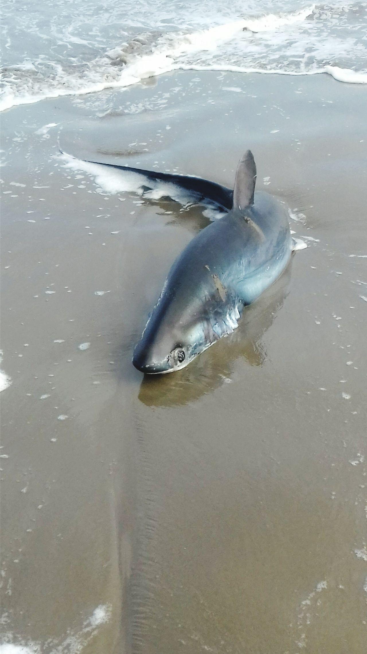 One Animal Day Sea Shark Sand & Sea Shark On The Sand