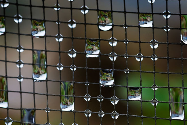 Several droplets Close-up Cover Photo Fujifilm Xt-10 Fujifilm_xseries Fujifilmph Macro Macro Water Travel Baguio Water Droplets Water Reflections Market Bestsellers June 2016 Bestsellers