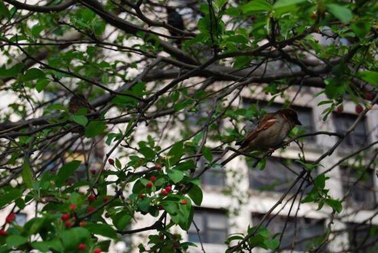 Lovely bird New York