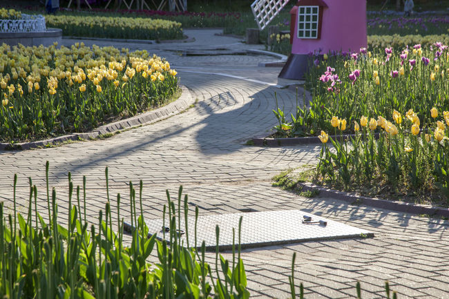 Abundance Beauty In Nature Blooming Blossom Day Flower Footpath Fragility Freshness Grass Green Green Color Growing Growth In Bloom Nature No People Outdoors Plant Spring Time The Way Forward Tranquility Tulip Walkway Walkwaywhy