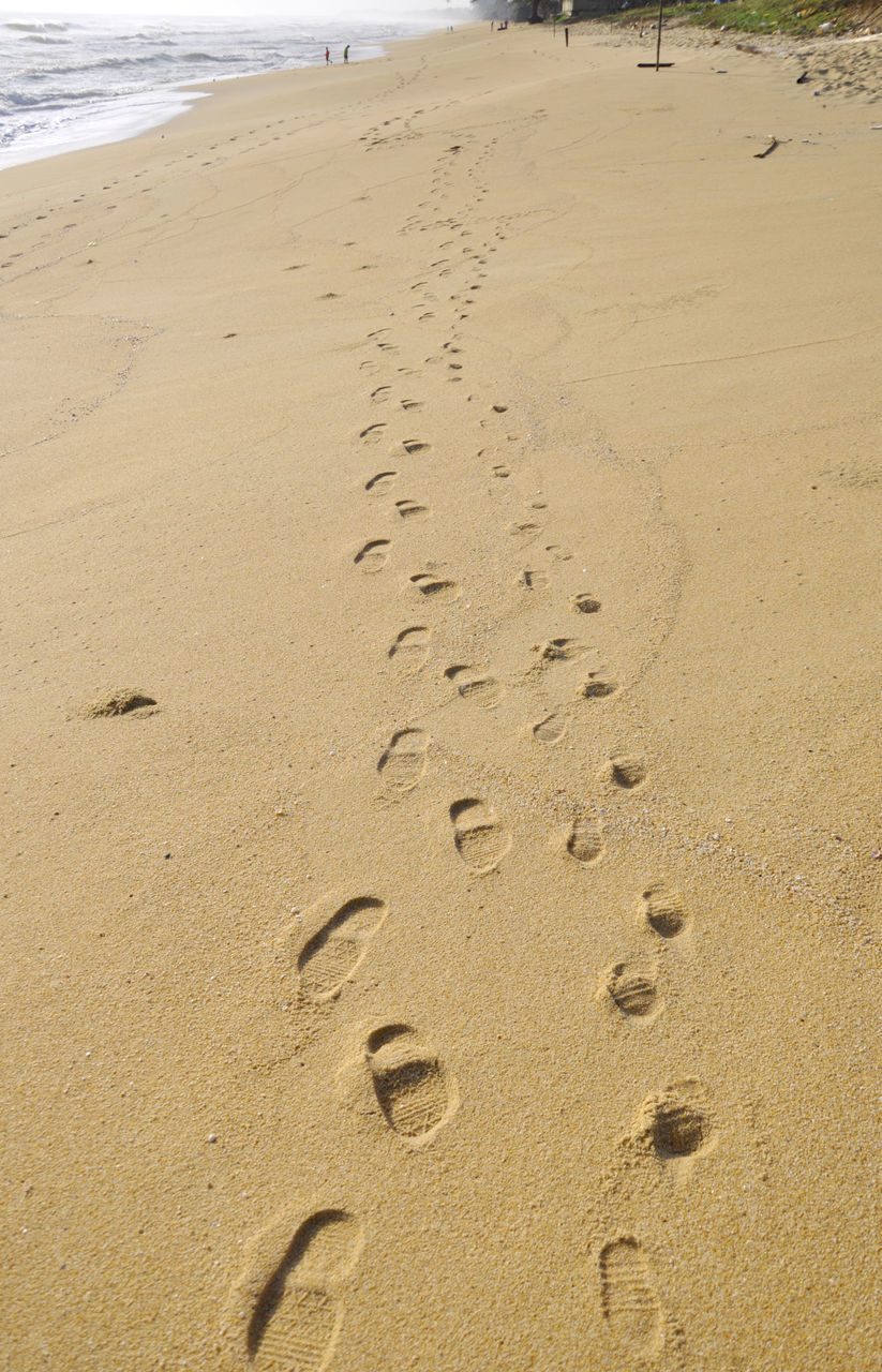 beach, sand, footprint, paw print, shore, nature, animal track, day, no people, outdoors, high angle view, sea, close-up, mammal