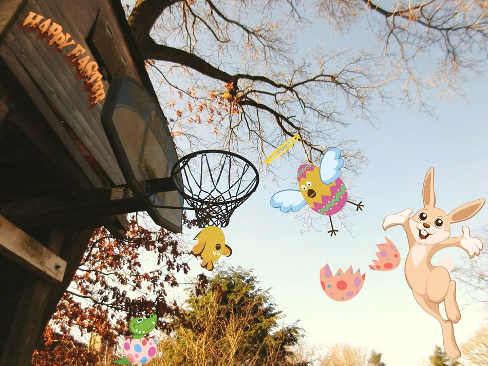 Easter Ready Funpics Funpic FUNNY ANIMALS Playground Playful Comic Illustration Easter Easter Sports Playing Eyeem Easter Cards Real Photography Basketball Basketball Game Easter Eggs Animal Themes Selfmade Selfmotivation Smile Mixedmedia Easter Bunny Easter Egg Hunt Funny Happiness