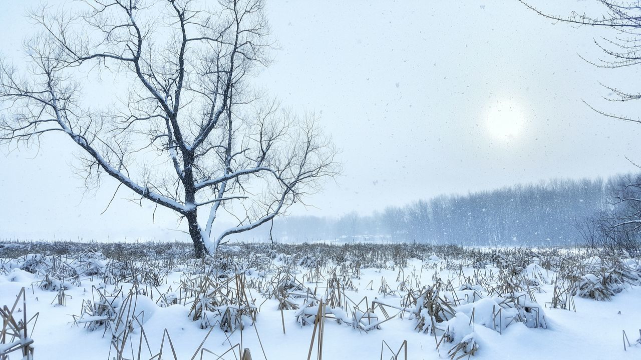 Rigaud Winter Cold Temperature Weather Nature Snow Frozen Backgrounds Beauty In Nature Sky Snowflake Snowing Bare Tree No People Outdoors Tree Cold Solitude Blue Winter Beauty In Nature Landscape_photography Rigaud Photooftheday Quebec Loneliness