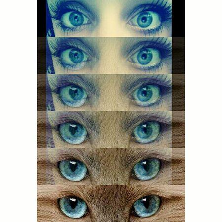 Tout le monde veut devenir un cat. Cat Metamorphose Blue Eyes That's Me Montage App Selfiesunday Miaou