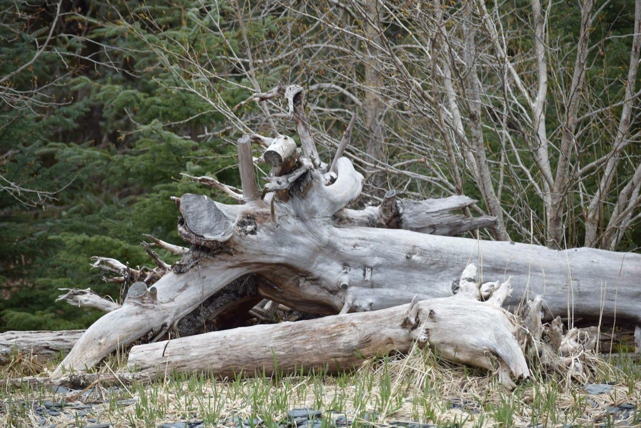 Field Tree Fallen Tree Nature Environment Forest Driftwood No People Outdoors Grass Day Animal Themes Mammal