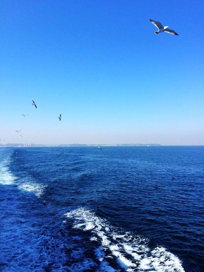 mine! mine! Sail Away, Sail Away Birds Sea