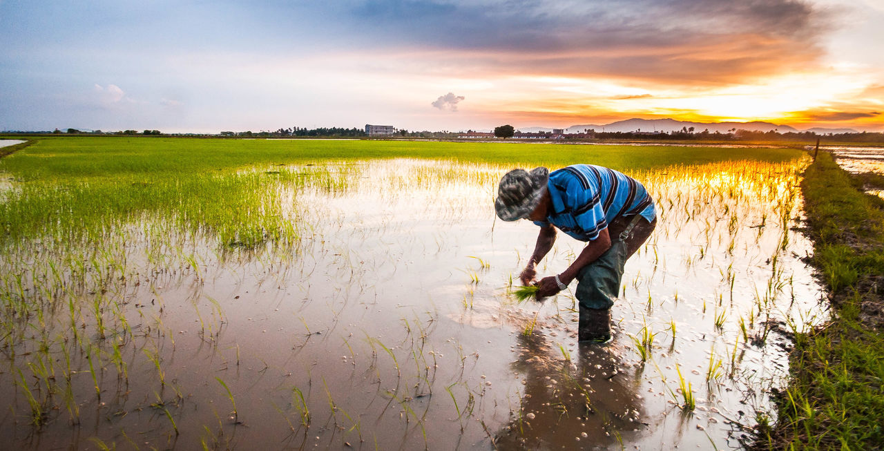 agriculture, one person, water, nature, farm, real people, field, standing, growth, rural scene, outdoors, beauty in nature, rice paddy, farmer, full length, childhood, sunset, sky, grass, men, scenics, marsh, boys, landscape, lifestyles, day, working, people
