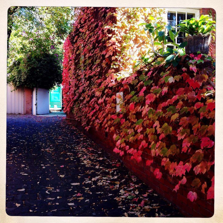 Colours of autumn next door Walking Around Captured Moment Colors Melbourne Taking Photos Mariogordon