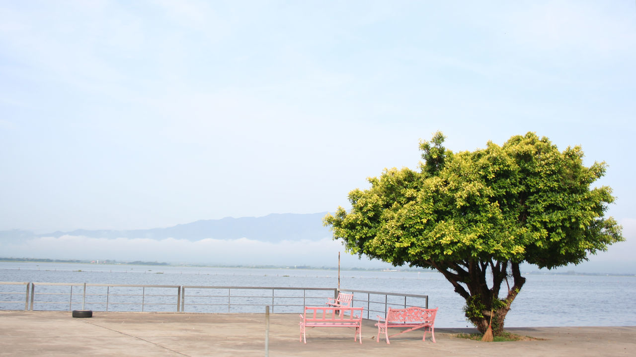 At a big lake Phayao Beach Beauty In Nature Day Food Idyllic Nature No People Outdoors Scenics Sea Sky Social Issues Tranquility Travel Destinations Tree Vacations Water