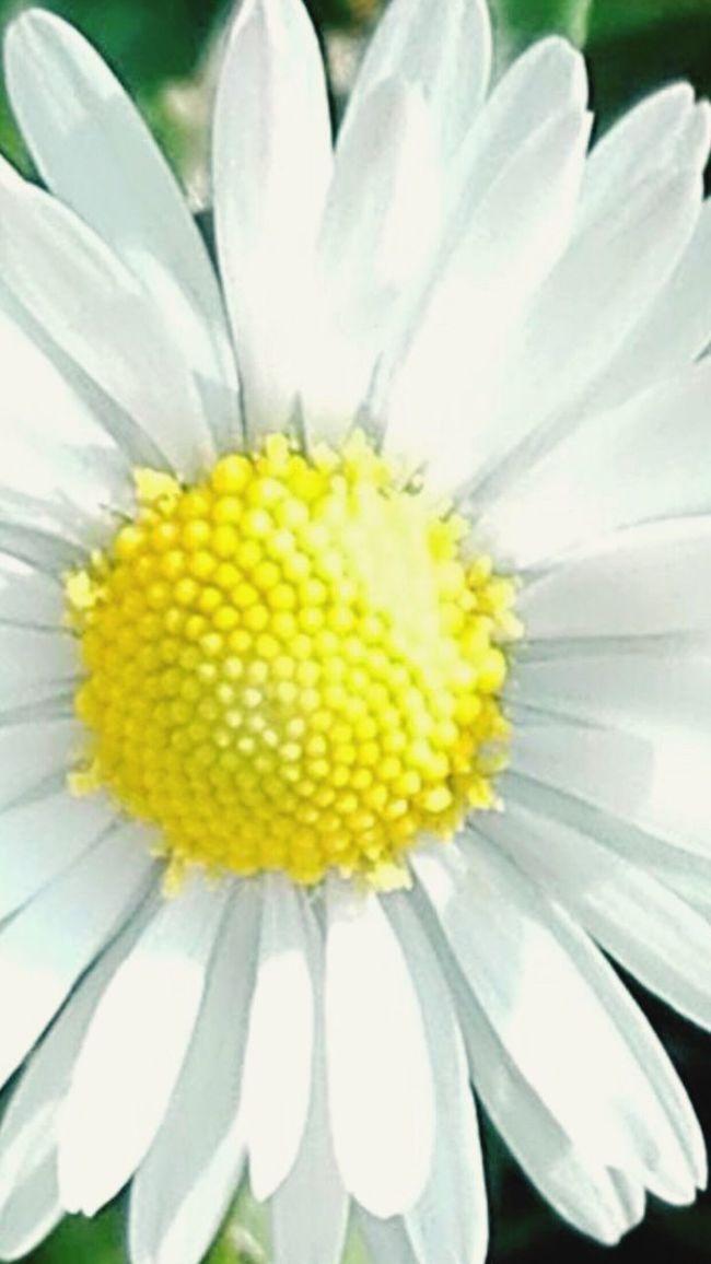The Symbol Of Spring