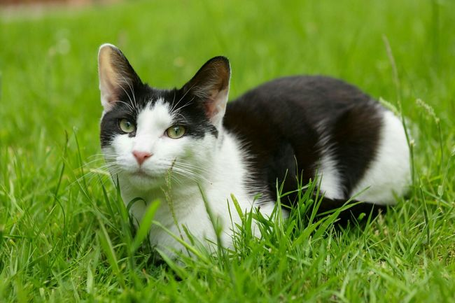 Pet Photography  Cat Lovers Photographer For Hire Canon5Dmk3 Sigma 70-200mm Cat♡ Cute Pets Pets Corner Petstagram Pet Portrait