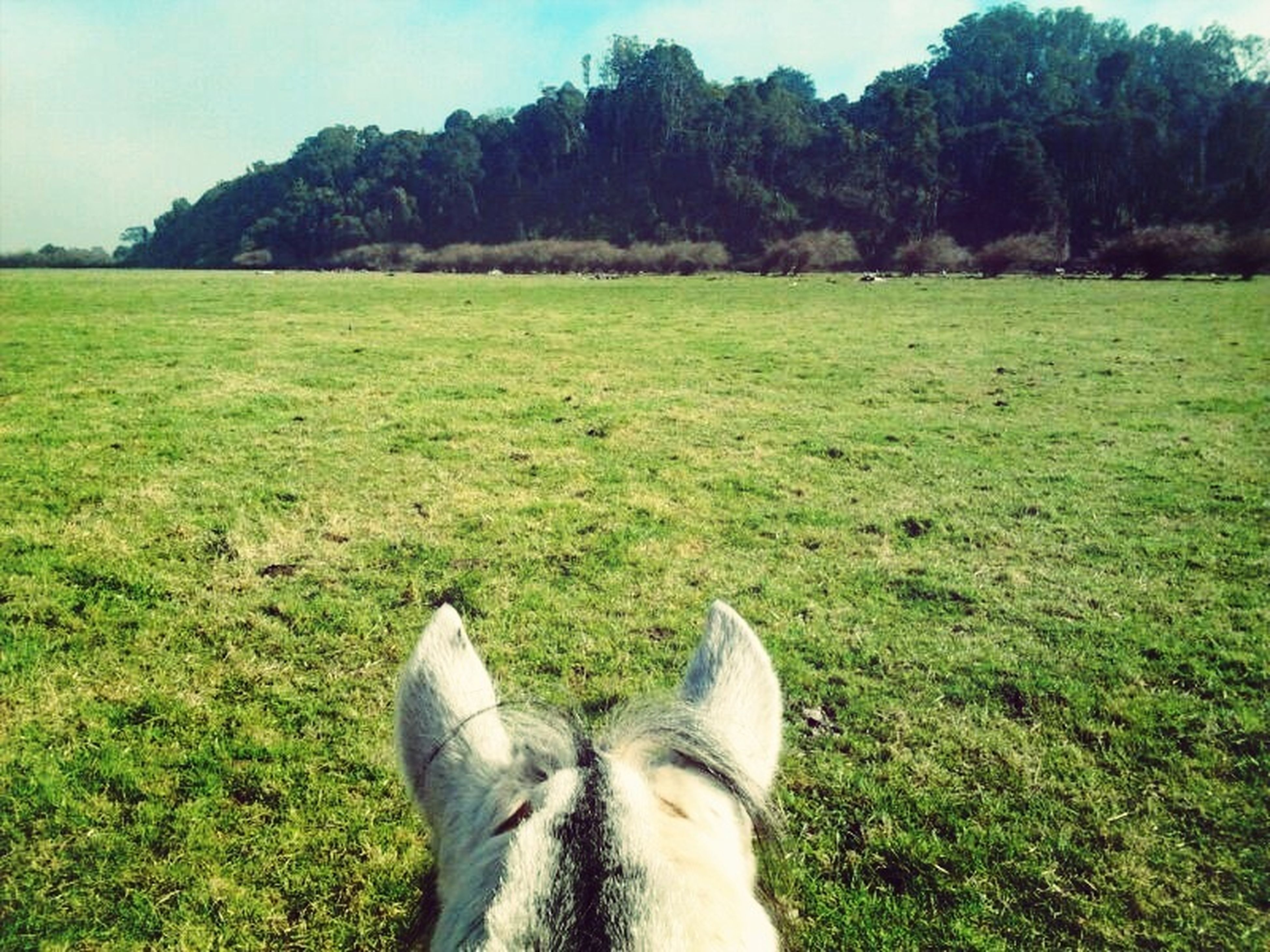 grass, domestic animals, mammal, animal themes, field, grassy, low section, pets, one animal, personal perspective, dog, person, green color, part of, unrecognizable person, relaxation, landscape
