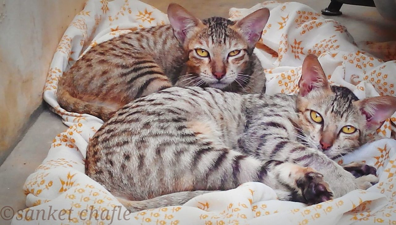 Mypets Incredible Moment Pet Photography  Innocent Face Kats Waiting For Mommy Raised Eyebrow Mid-day Cute Cats Pets Corner Two Is Better Than One OpenEdit