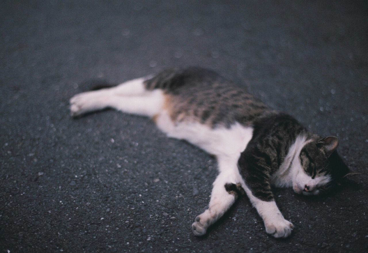 35mm Film Film Domestic Cat Cat Film Photography Filmisnotdead Filmcamera