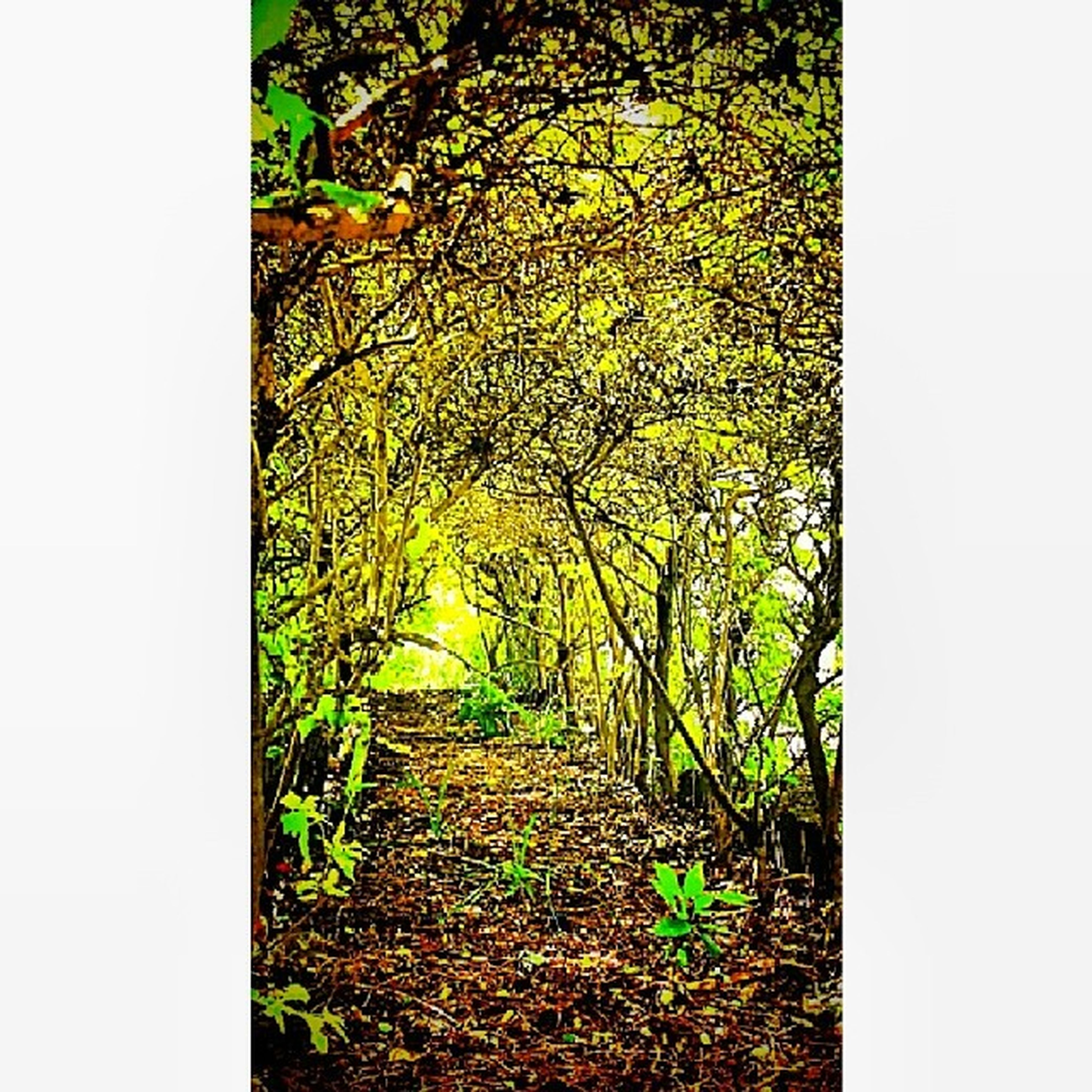 transfer print, growth, tree, auto post production filter, plant, the way forward, tranquility, green color, nature, tranquil scene, grass, clear sky, beauty in nature, field, day, green, outdoors, no people, leaf, footpath