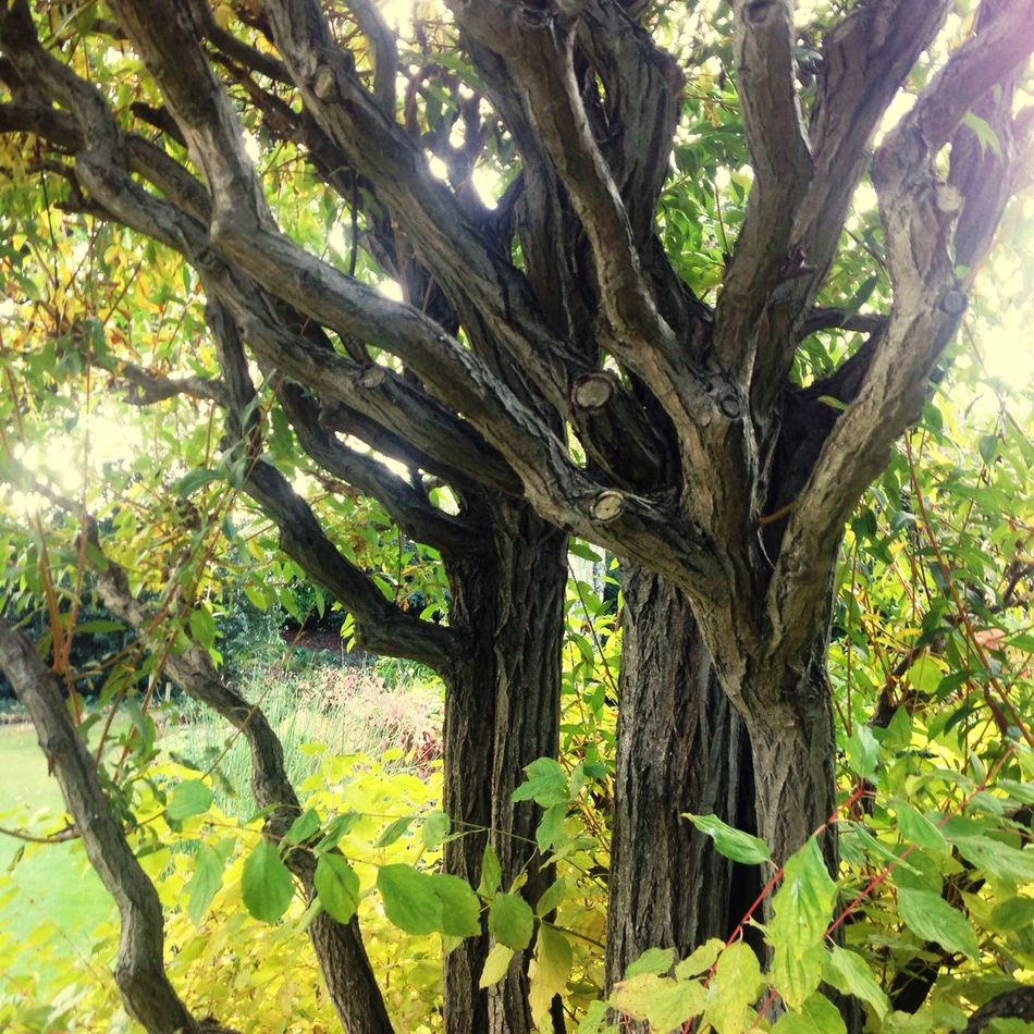 Beth Chatto Gardens Tree Nature Tree Trunk Growth Branch Beauty In Nature Tranquility Outdoors Green Color No People Low Angle View Day Freshness