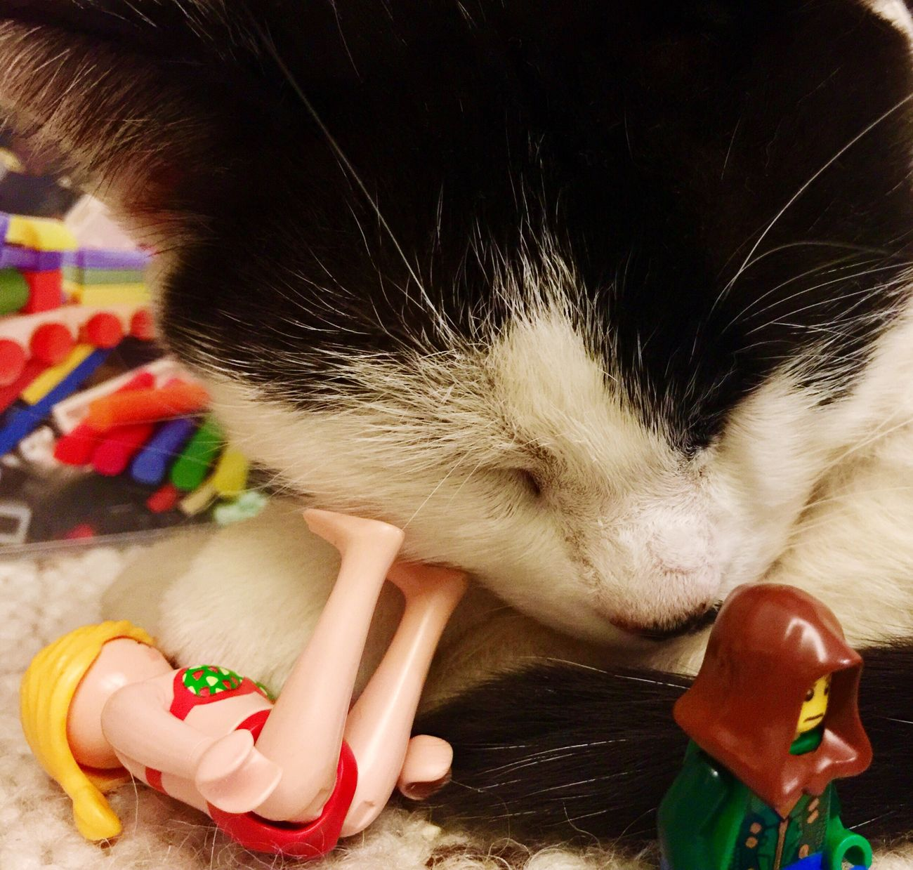 Playground Cat LEGO Afternoon Lasy Hold My Head