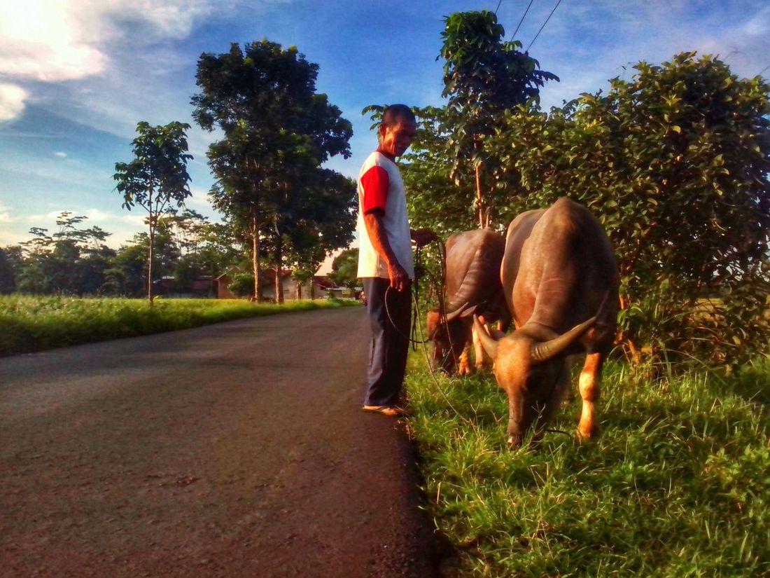 People Watching Animal_collection Hdr_Collection Taking Photos Hello World Exploring New Ground Pekalongan Indonesia_allshots BeautyfullIndonesia Surobayan
