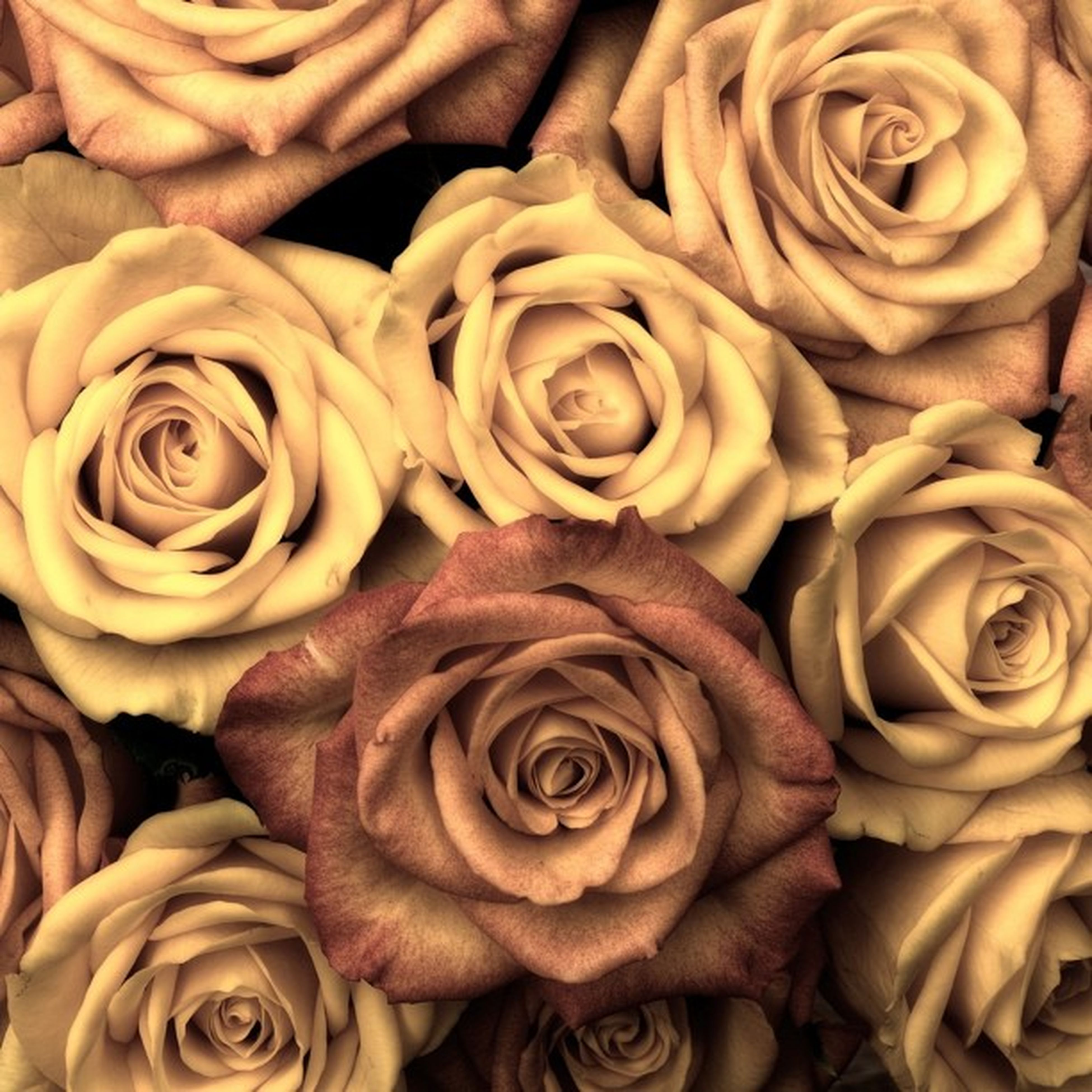 flower, freshness, rose - flower, full frame, petal, backgrounds, flower head, fragility, beauty in nature, close-up, indoors, rose, high angle view, nature, natural pattern, abundance, no people, growth, bouquet, pattern