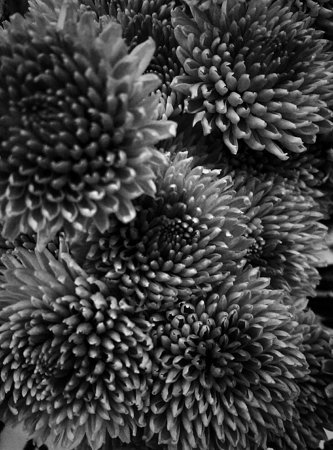 Flowers Blackandwhite Photography Monochrome Bnw_collection