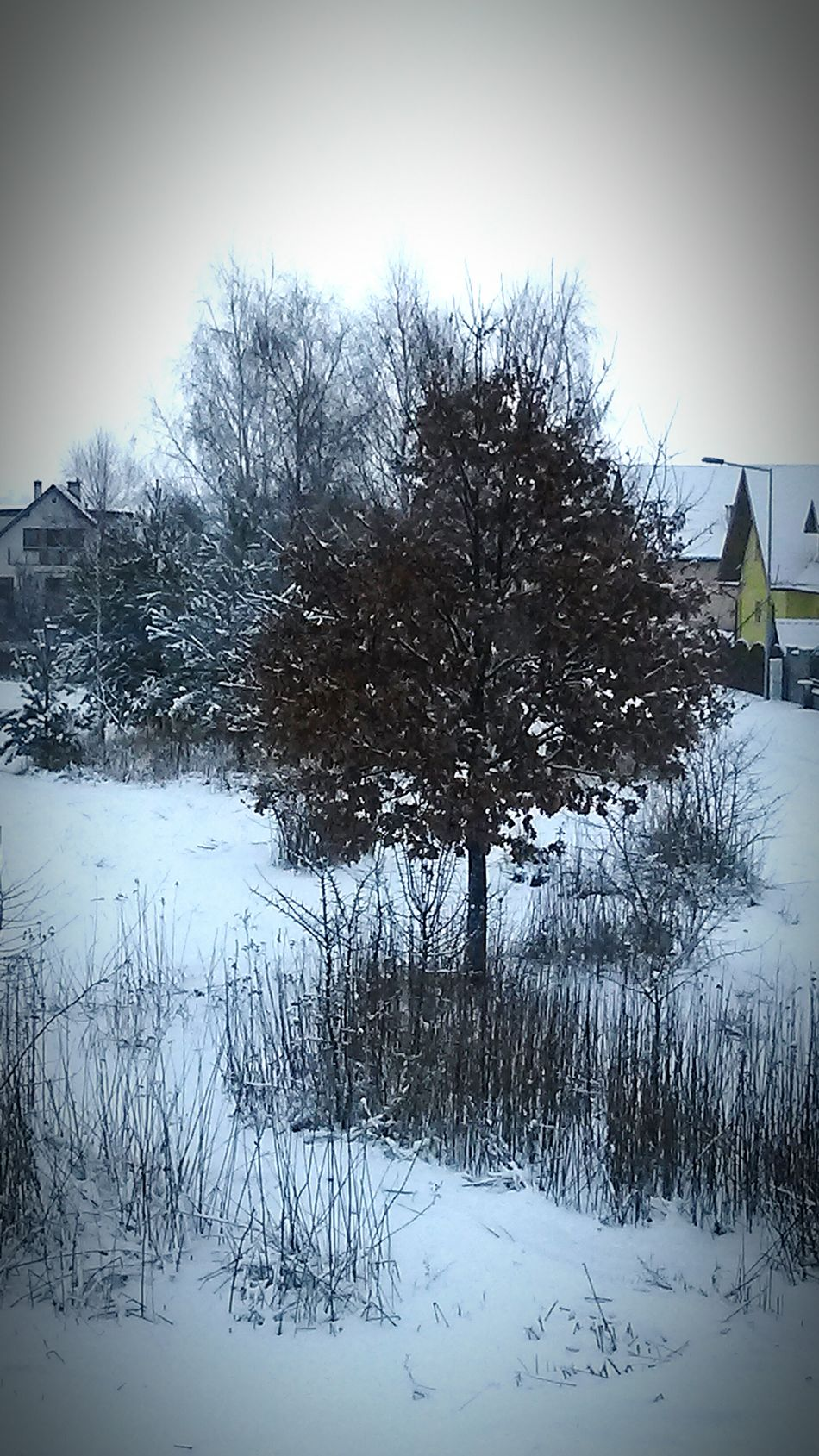 Love ♥ Happy :) Beautiful Winter Trees Tree In Snow Snow Day Snow ❄ Snow Tree Wintertime Winter In Poland Winter Nature Poland Lovely