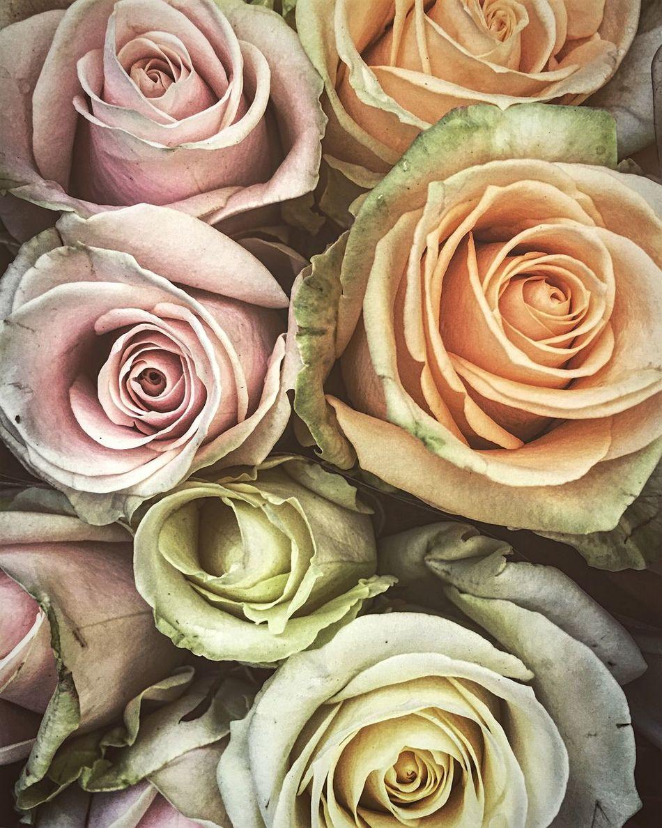 Flowers Market Columbiaroad East Eastlondon London Weekend Loveit
