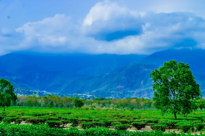 Nikon Nikon D3200 Nikonphotography Mountain Outdoors Beauty In Nature Agriculture Cloud - Sky Field Rural Scene Nature Sky Landscape Farm Tree Growth Scenics Crop  Green Color Plant Social Issues No People Freshness Nature Photography EyeEm Best Shots