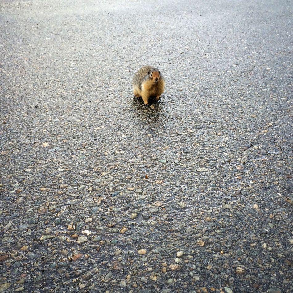 Hello! Nature Capturing Freedom Chipmunk The Minimals (less Edit Juxt Photography)