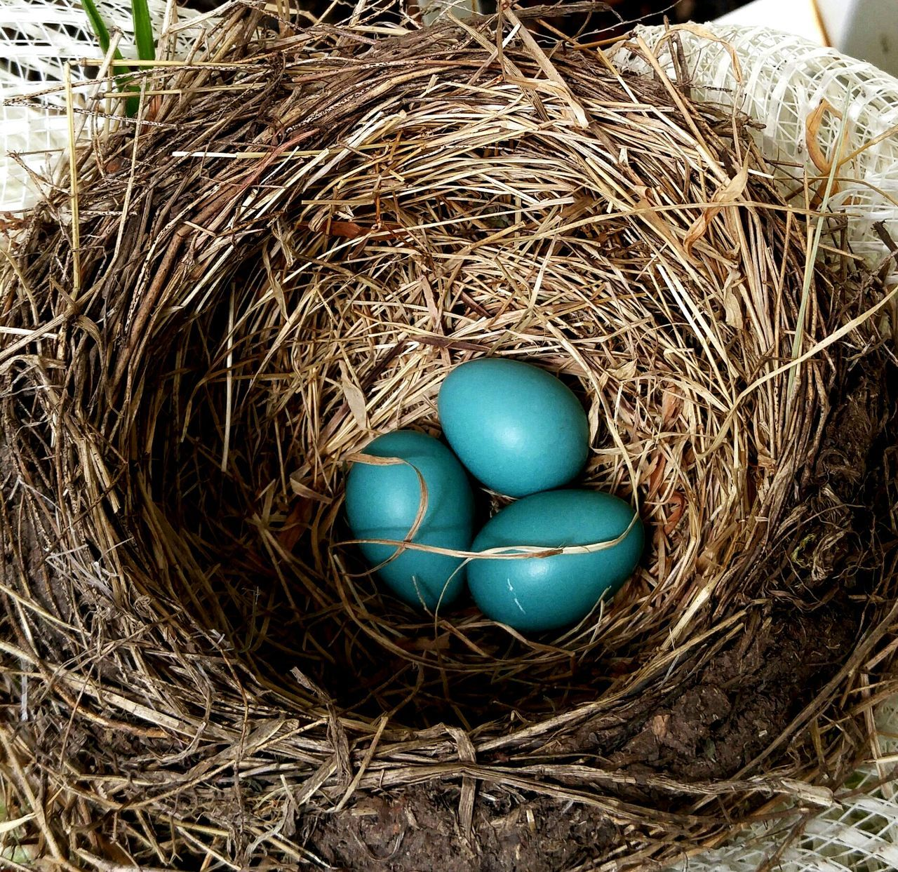 Bird Photography Birdnest Bird Nest Birdnesup Close And Personal Bird Nest On Wreath Nature's Diversities