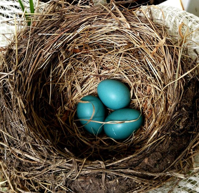 Bird Photography Birdnest Bird Nest Birdnesup Close And Personal Bird Nest On Wreath Nature's Diversities