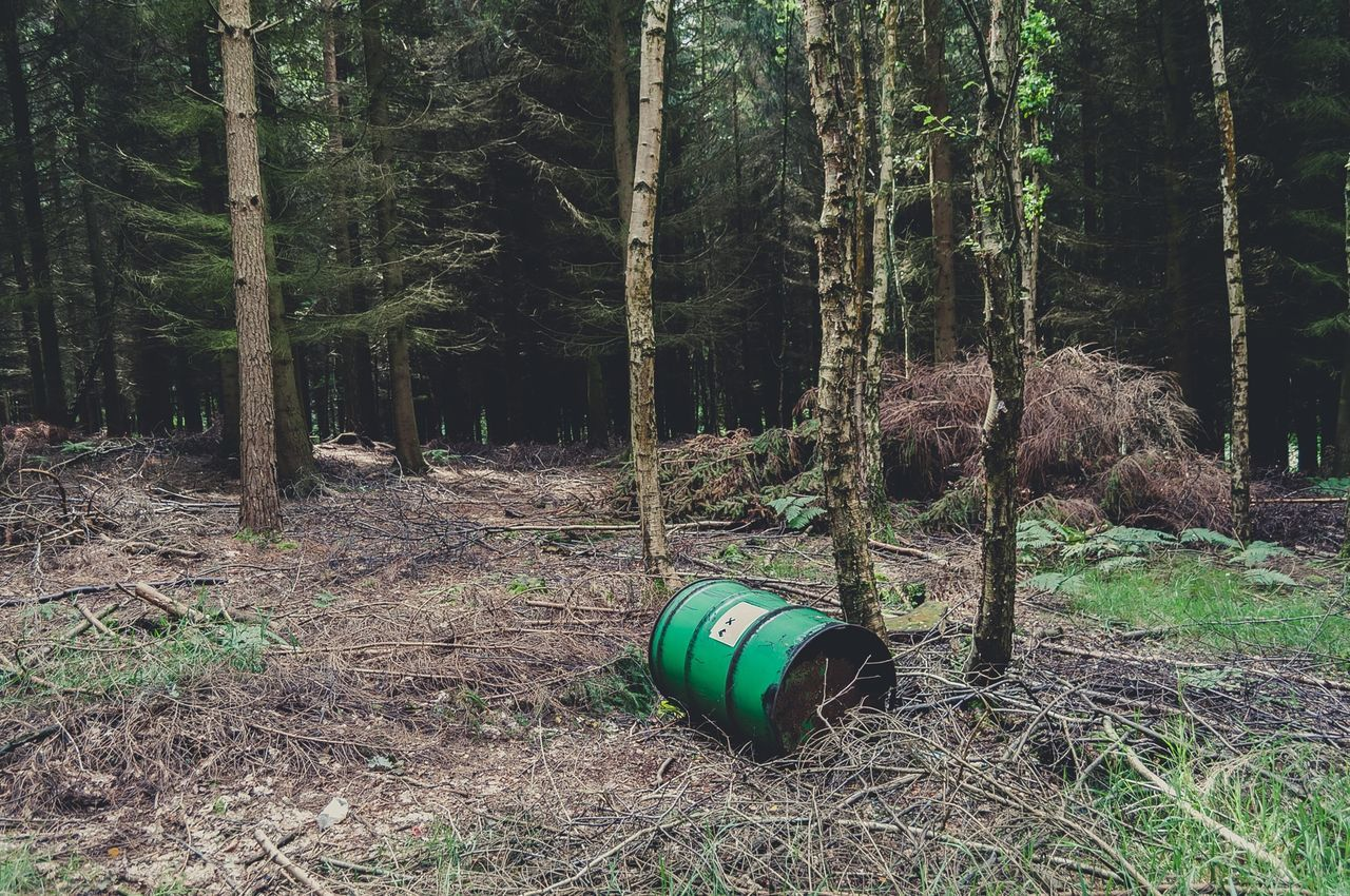 Beautiful stock photos of oil, Atherstone, Beauty In Nature, Day, Forest