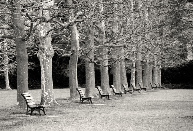 bench and big tree in monochrome Autumn Beauty In Nature Black And White Branch Day Dry Grass Monochrome Nature No People Outdoors Tree Tree Trunk