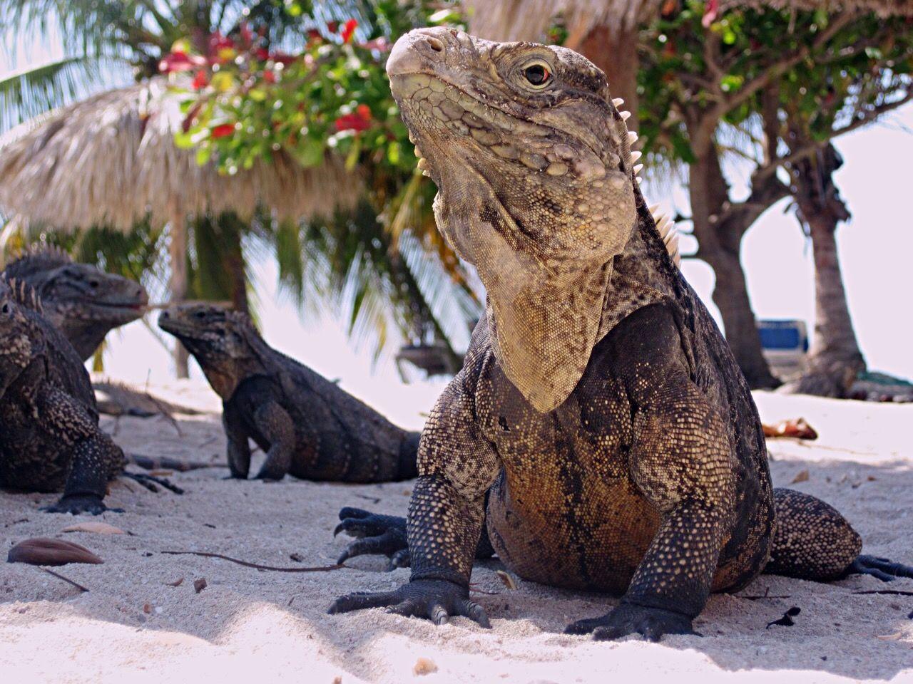 Beautiful stock photos of cuba, Animal Themes, Animals In The Wild, Beach, Day
