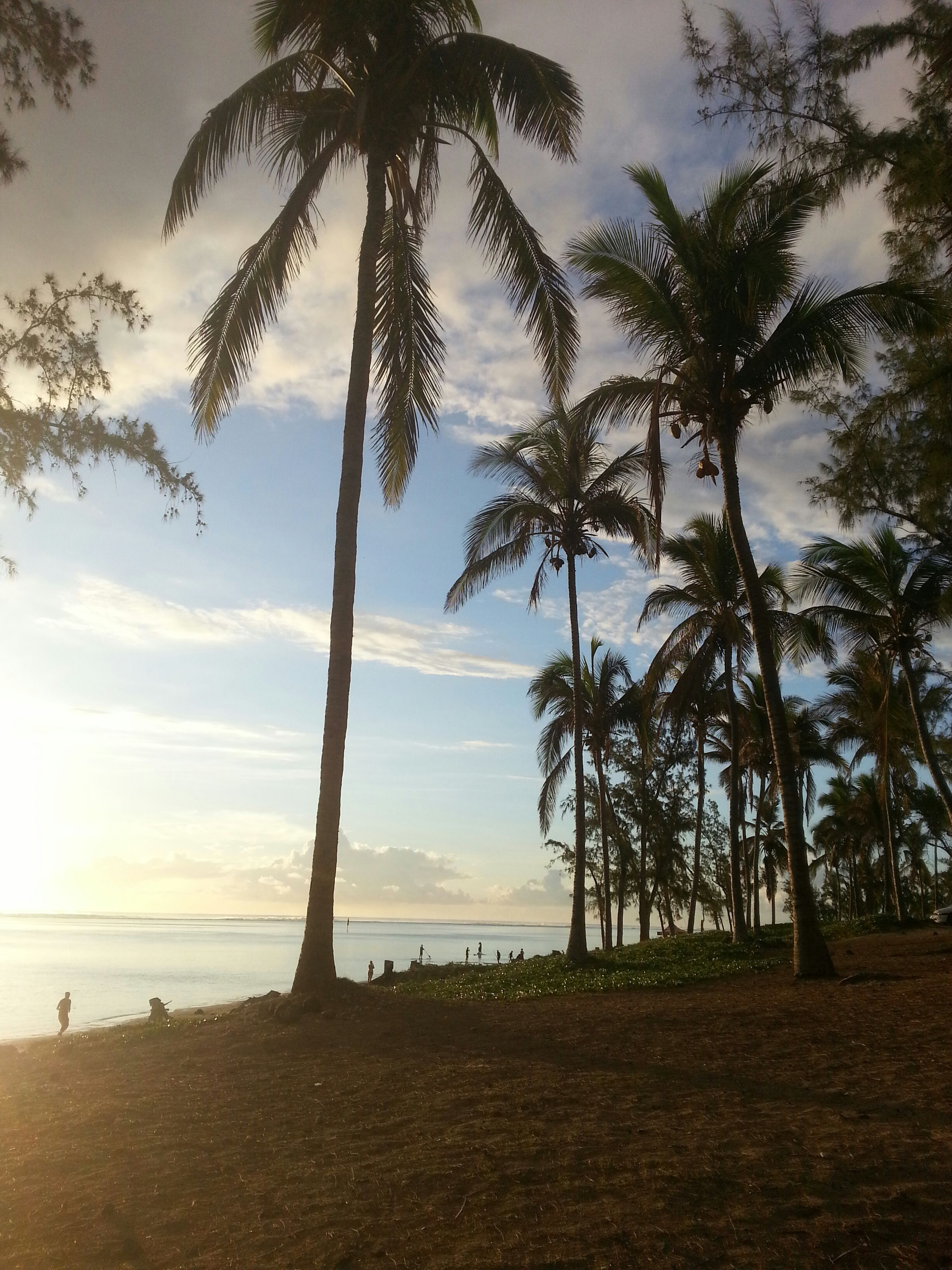 tree, tranquility, palm tree, sky, tranquil scene, beach, scenics, sea, beauty in nature, sunset, horizon over water, nature, silhouette, tree trunk, water, idyllic, shore, growth, cloud - sky, incidental people