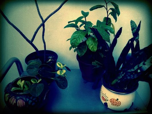 Plants by Filie