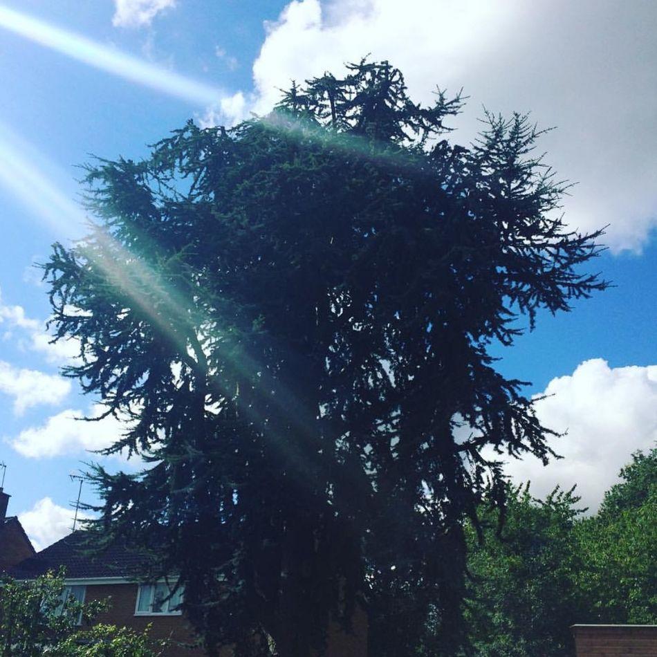 My Big Tree. Tree Garden Nofilter Sky Blue Sky Swindon Nature