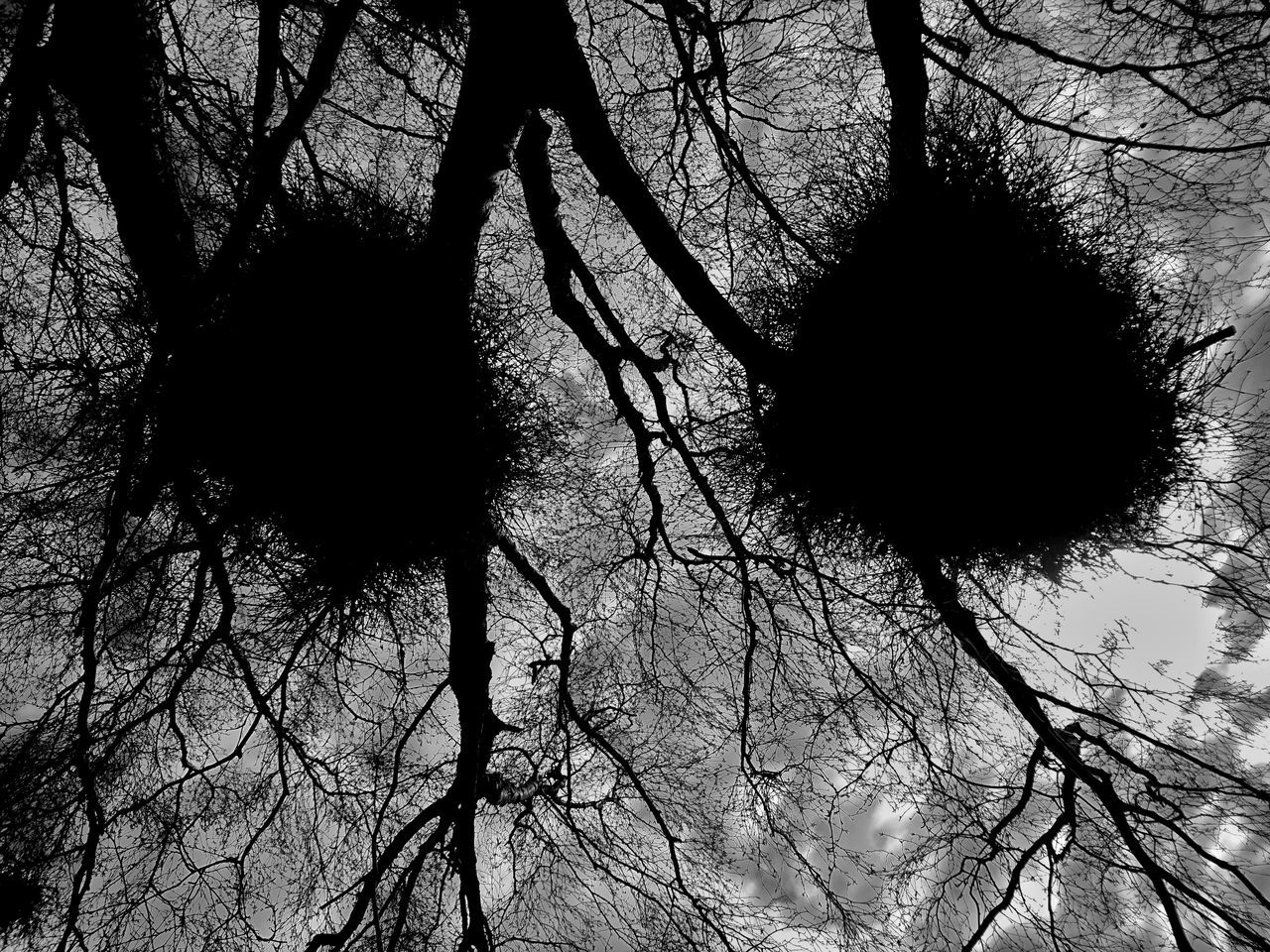 Two Nests // Tree Low Angle View Sky Nature Silhouette Branch No People Growth Beauty In Nature Day Outdoors Close-up Stock Image EyeEm Best Edits EyeEmbestshots Eyeem Market Eyeemphotography Walking Wood Birds Nest Nest Look Up And Thrive Nature Tree Black And White