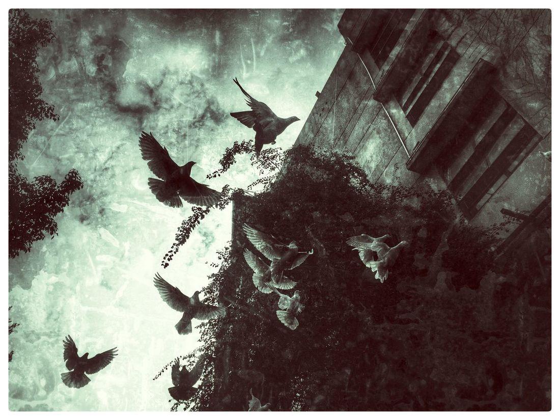 中国 街头摄影 佛山 Streetphotography Blackandwhite White Pidgins