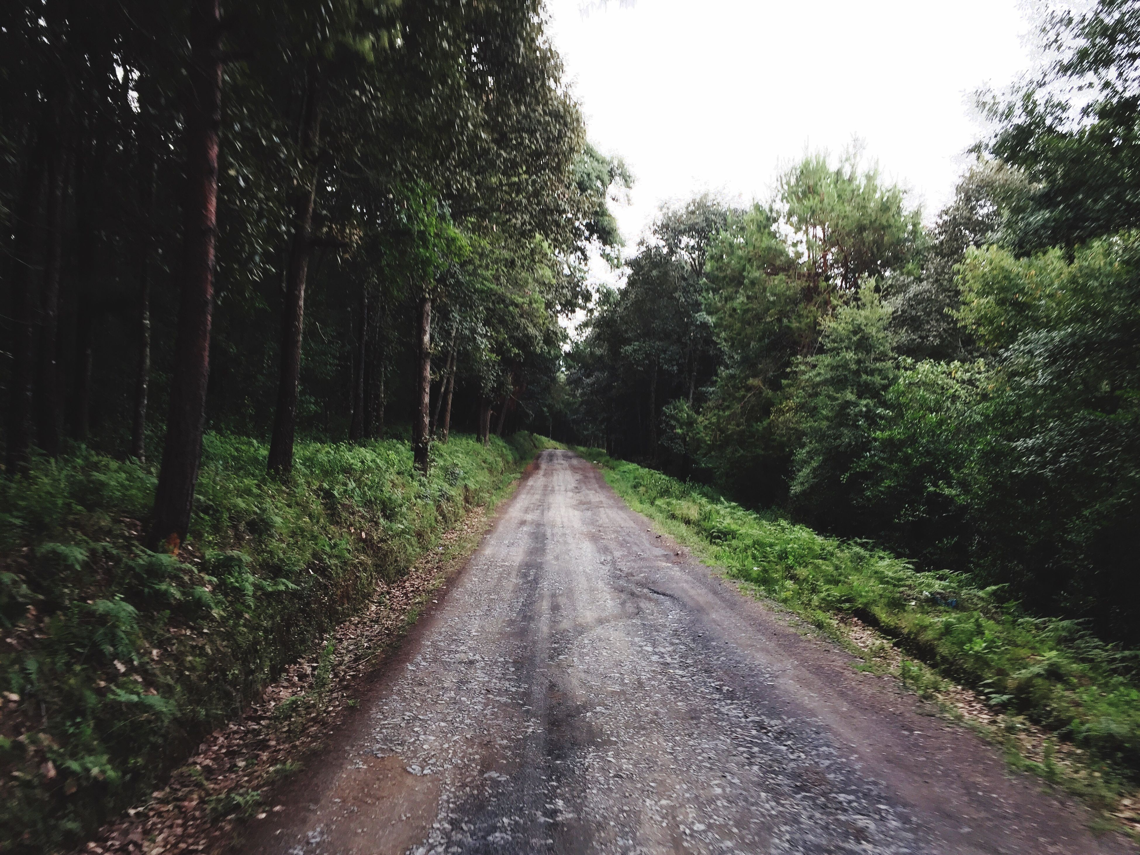 the way forward, tree, diminishing perspective, vanishing point, transportation, growth, tranquility, road, nature, forest, tranquil scene, clear sky, green color, day, beauty in nature, no people, outdoors, plant, grass, non-urban scene