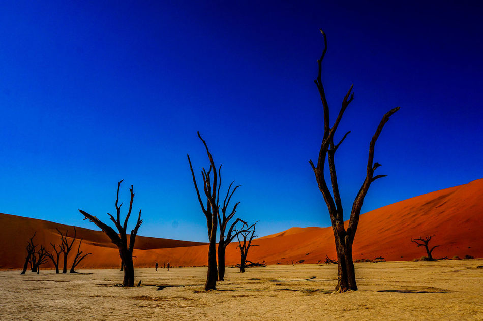 Beautiful stock photos of wüste, Acacia Tree, Arid Climate, Bare Tree, Beauty In Nature