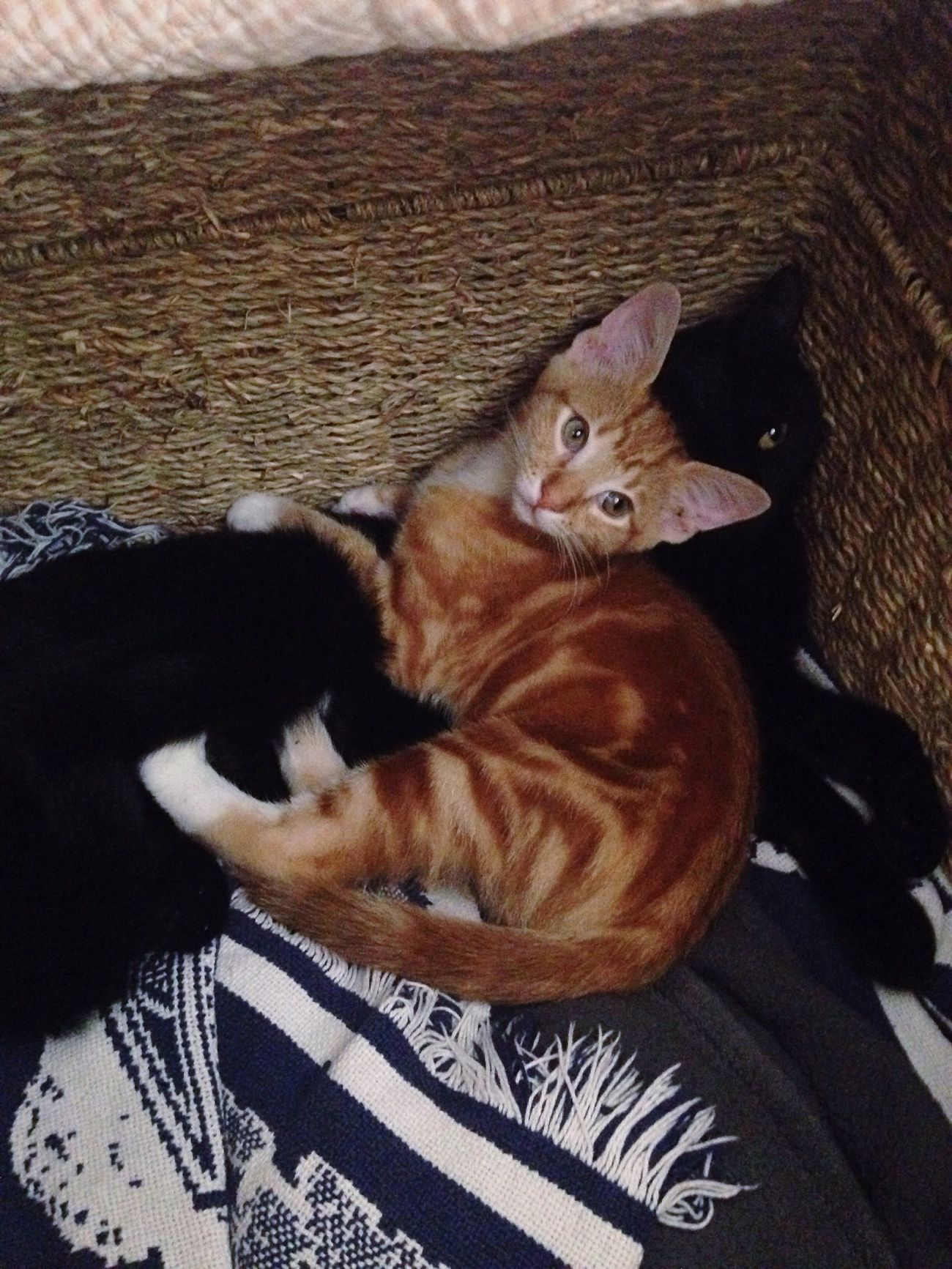 Always Be Cozy Cats Cuddle Orange And Black I love this picture so much because these two cats always fight, yet today, my birthday, the orange one went over to the black one and layed on her. It was an amazing moment, and it made me feel warm and cozy inside.
